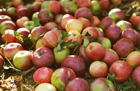 Pommes de l'Avesnois