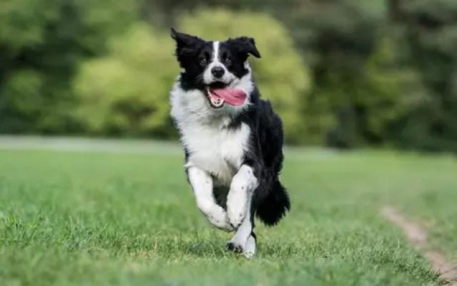 Animais te ajudam a sair de casa e ter uma vida mais ativa