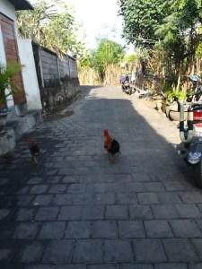 Kein Kindergarten aber ein Hühnertreff bei Lars auf Bali