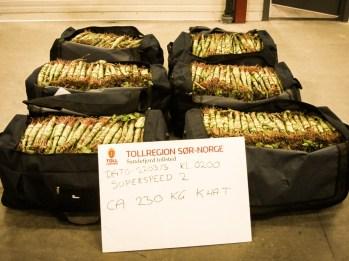 Fra beslaget av 229 kilo khat i Larvik/Sandefjord 22.mars 2013. (Foto: Tollvesenet)