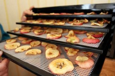 Epler til tørk i dehydratoren (Foto: Sun Iren Bjørnås, NRK)