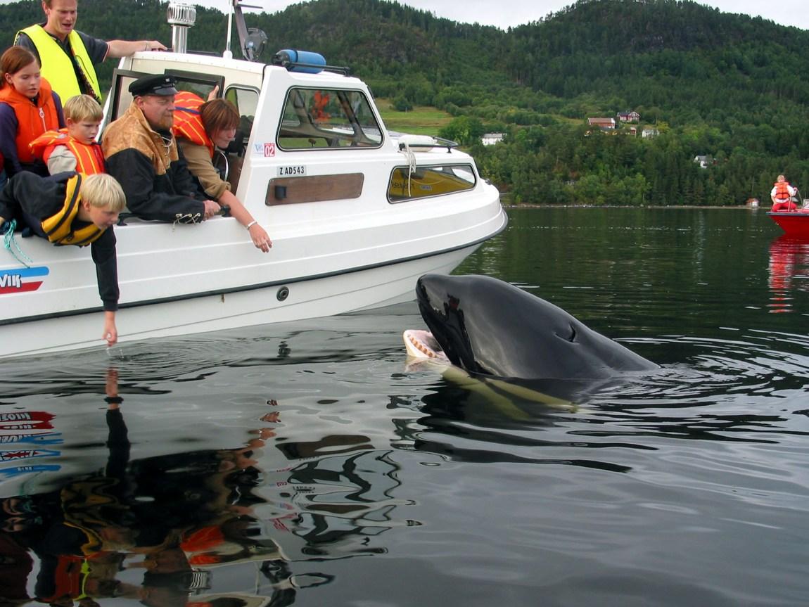 Keiko i Norge.