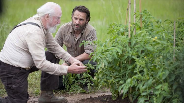 Hershel og Rick jobber med tomatplantene i fjerde sesong av The Walking Dead. (Foto: AMC, FOX Norge).
