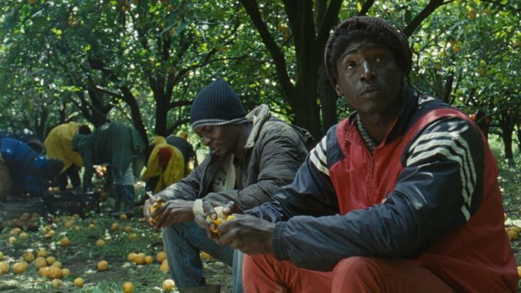 Ayiva (Koudous Seihon) og Abas (Alassane Sy) får jobb som appelsinplukkere i Middelhavet (Foto: Mer Filmdistribusjon).