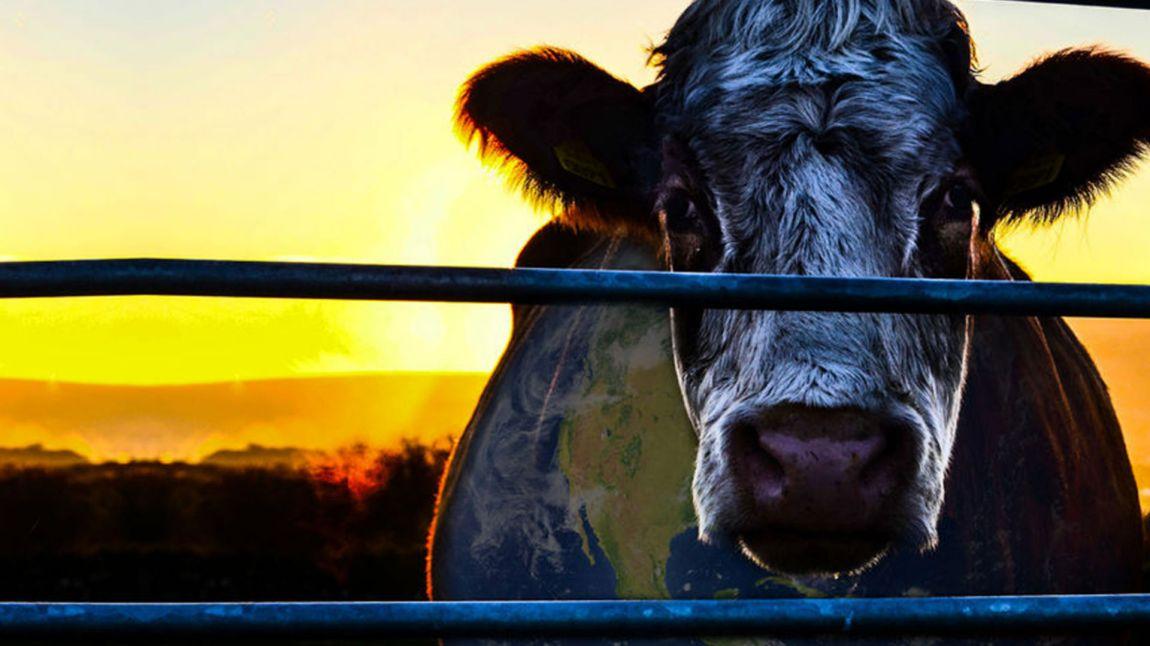 Cowspiracy er en tankevekende dokumentar fra 2014. (Foto: A.U.M. Films, First Spark Media).