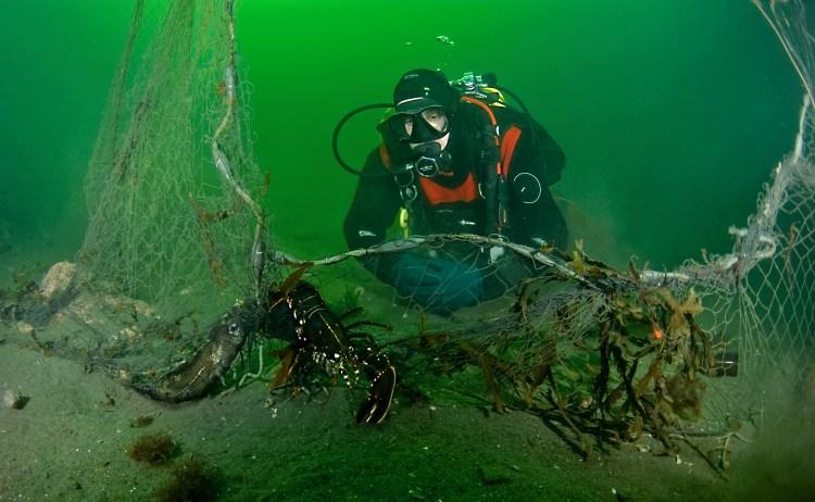 Bildet viser ein trist dykkar som ser på eit spøkelsesgarn som har fanga ein humrar og ein torsk.