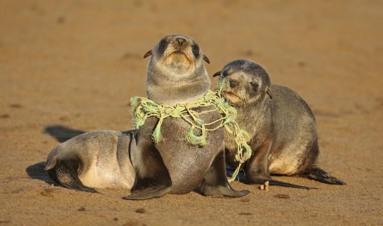 KAMPEN MOT PLAST I HAVET: Åtte millioner tonn plast havner i havet hvert år. Foto: Jamie Lamb, Getty Images