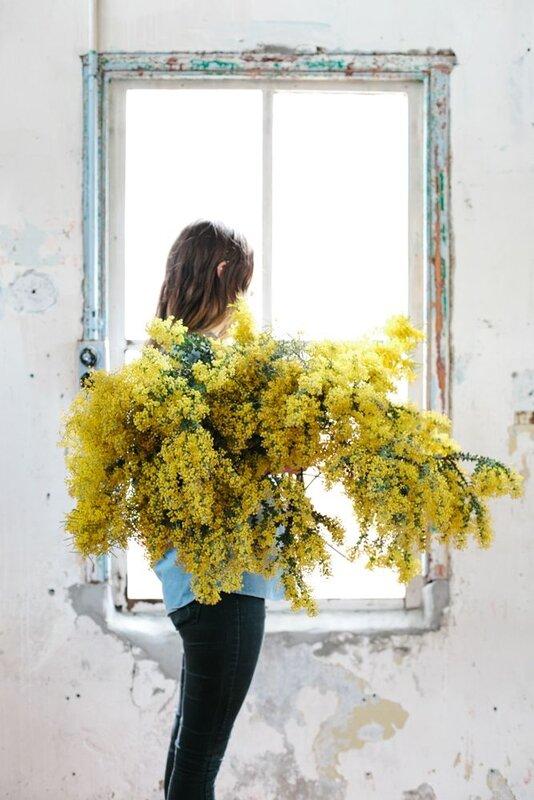 Le Mimosa Le Rayon De Soleil Au Coeur De Lhiver Astuces