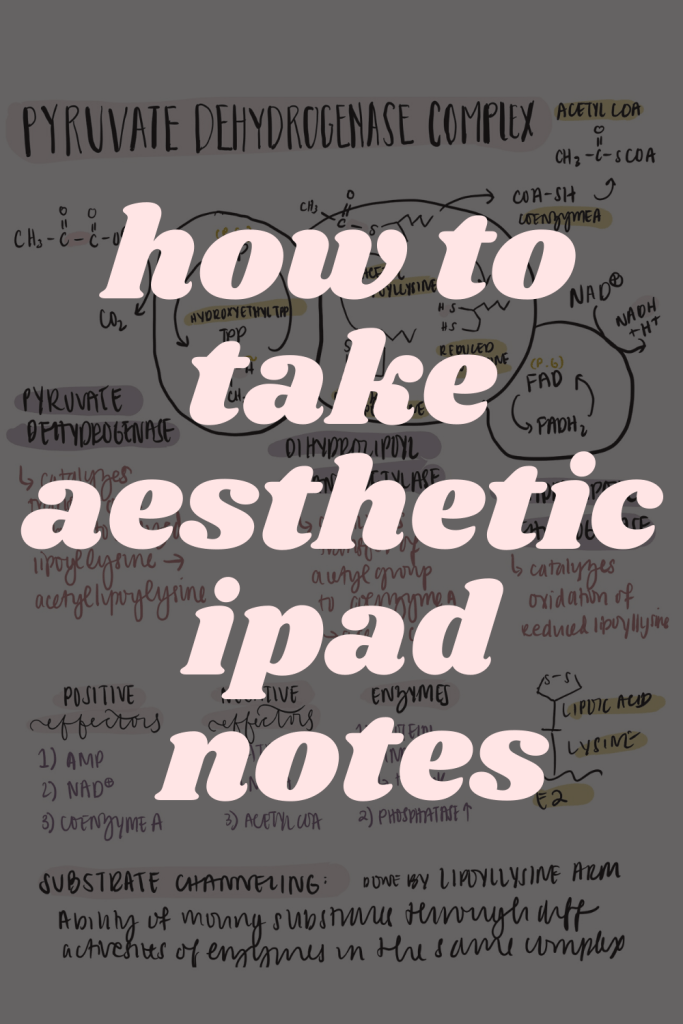 In this post, learn how you can take aesthetic notes on your iPad. I'm giving you the best tips and tricks on how to make your notes look neat so that you can be well-prepared for your exams. If you currently don't study with an iPad, this post will convince you to start!