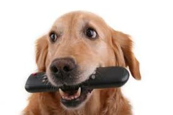This Might Be Why Dogs Love Chewing on Remotes