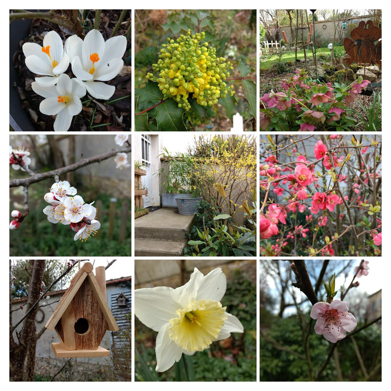 IMG_20190227_170010036-COLLAGE
