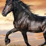 Freedom Horse Brown Horse Wallpaper Animals Horse Grass Hd Wallpaper Wallpaperbetter