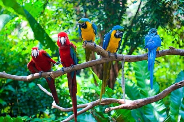 Dua Macaw Merah dan tiga Macaw biru dan kuning, hijau, burung, cabang,  burung beo, Wallpaper HD | Wallpaperbetter