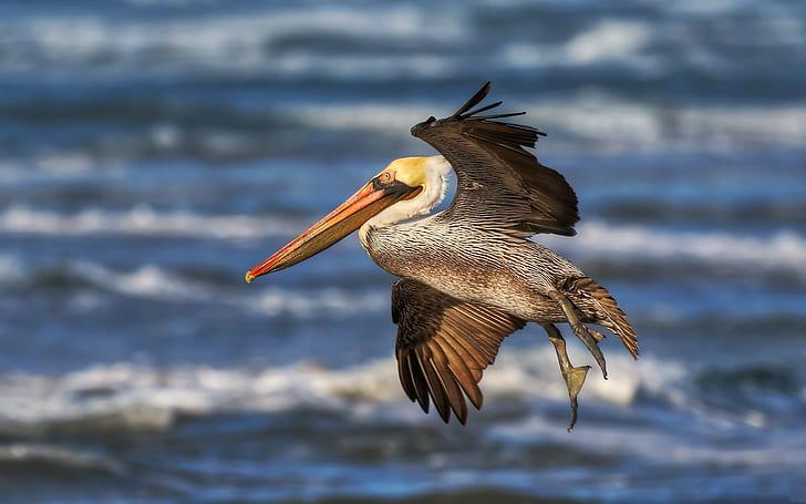 Wallpaper Burung Pelikan HD unduh gratis | Wallpaperbetter