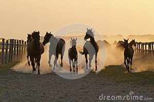 herd-horse-evening-time-57