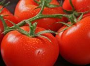 x_art_alicaments_tomates_abc81_1_