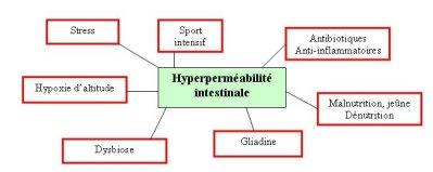 hyperperméabilite