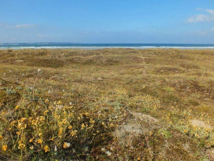 dunes-bretagne-finistere-baie-douarnenez-sainte-anne-la-palud-faune-flore-promenade-sortie-vacances (8)