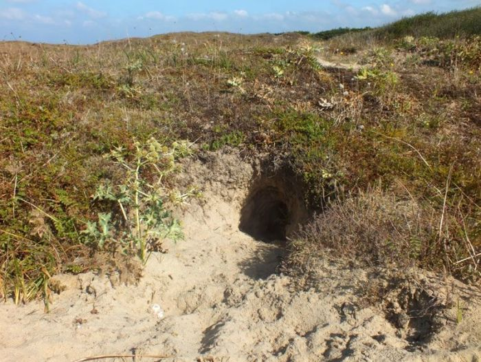 dunes-bretagne-finistere-baie-douarnenez-sainte-anne-la-palud-faune-flore-promenade-sortie-vacances (6)