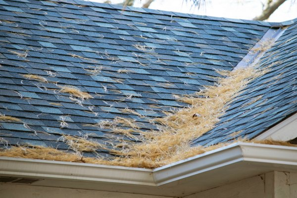 lowcountry style living why you should hire a professional roof cleaning company