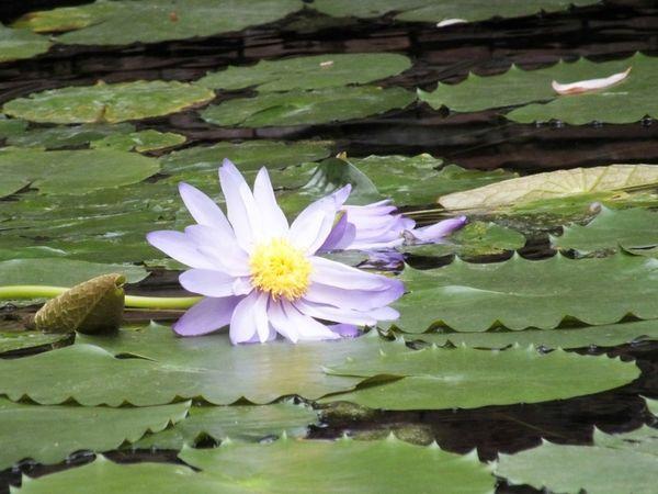 Jardin-des-plantes-Rouen-serre-fleurs-monet (12)