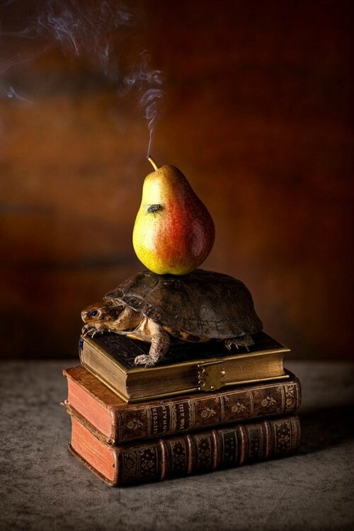 still-life-photography-kevin-best-09