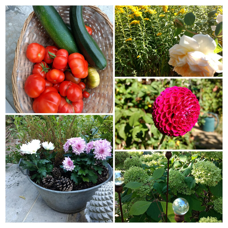 IMG_20190916_110423657-COLLAGE