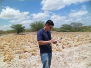 Prefeitura de Paulo Afonso busca indenização para agricultores que perderam as safras em 2015 e 2016.