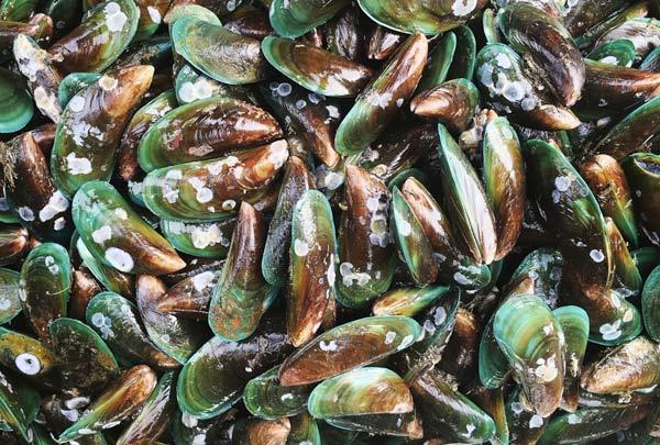 A Seagri criou uma pequena unidade de produção, que aumentará o valor comercial de pescados antes descartados