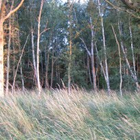 På tur ind i skoven
