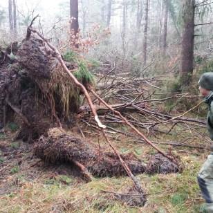 Væltede træer.