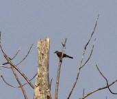 01a. WEKI 29 Sep 2012, Long Pond Trail, Presque Isle S.P., Pa., J. McWilliams
