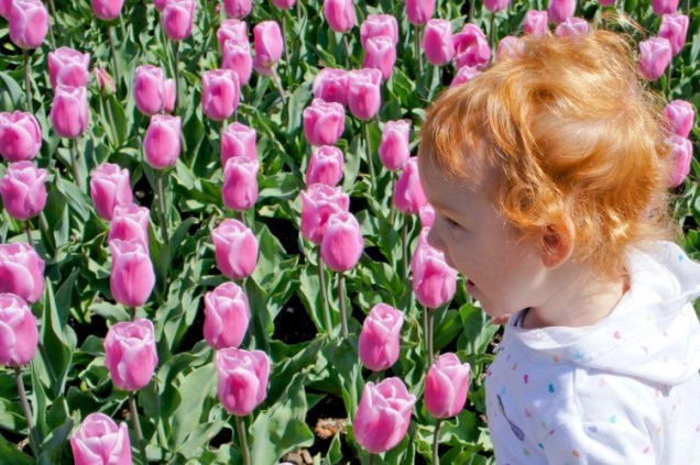 Charlie with Tulips