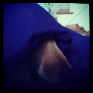 Monk Dog