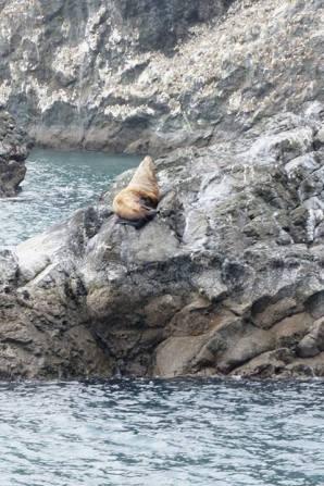 Big Sea Lion