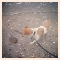 Spike vs Horseshoe Crab