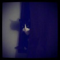 Stalker Kitteh