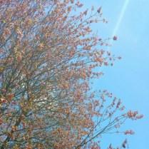 Pink Whirligigs