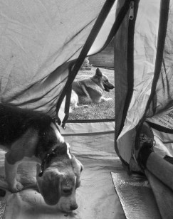 the constant battle with sharing a tent