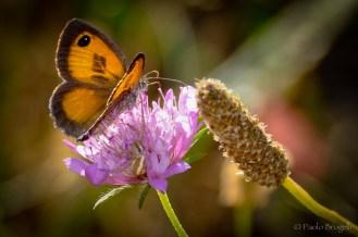 La danza della farfalla 3