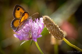 La danza della farfalla 5