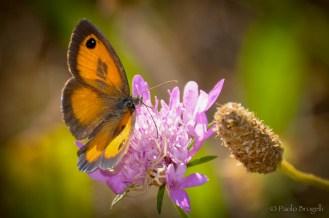 La danza della farfalla 6