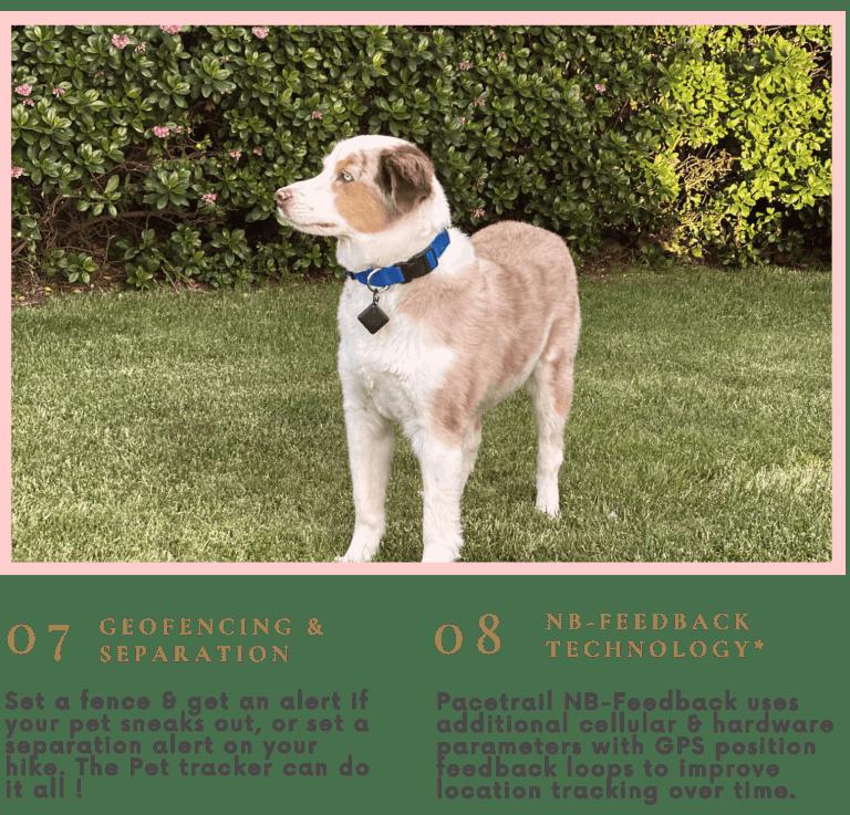 Pacetrail Pet Main 1