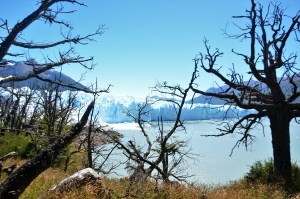Glacier de Patagonie