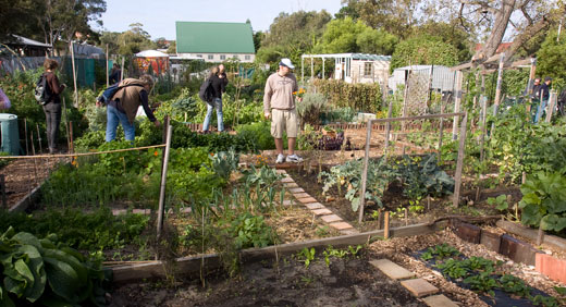 Randwick Organic Community Garden features both allotments and shared gardening areas. The garden is entirely rainfed (there is no connection to city water) and harvests water from the adjacent stable, storing it in a 23,000 litre water tank.