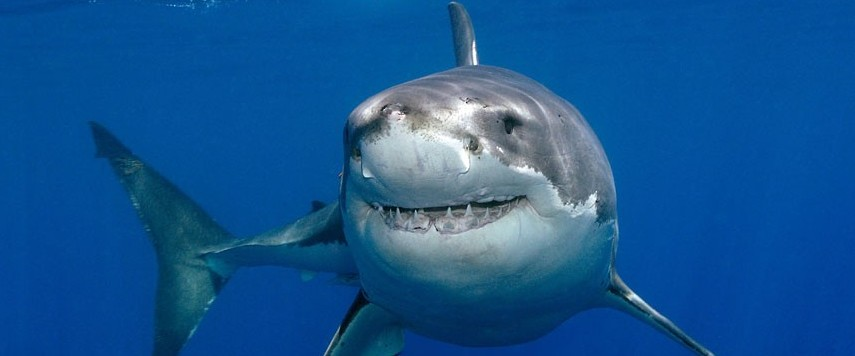 Image result for friendly shark