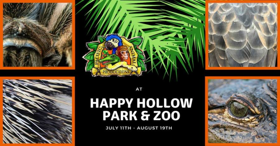 Summer Backyard Bayou at Happy Hollow Park & Zoo