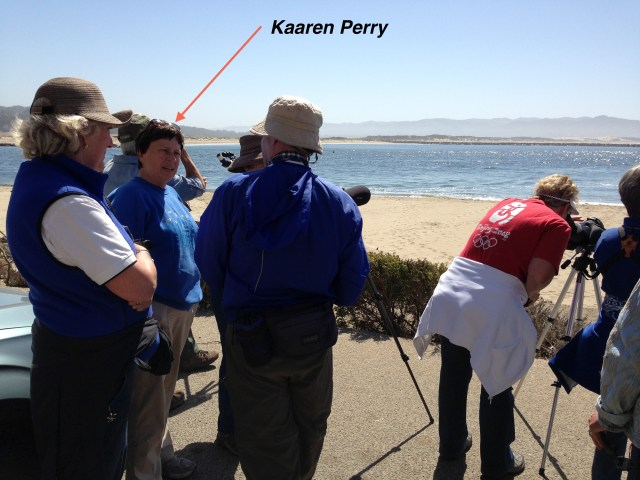 Showing birders where the Blue Footed Booby is on a distant jetty.  Photo by Heather O'Connor