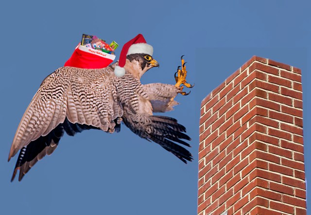 Rapid raptor delivery service   Photo and photoshop art by Cleve Nash