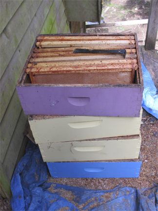 Bee Boxes Stacked for scraping